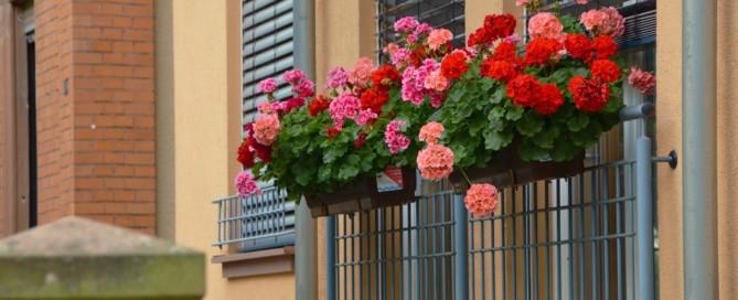 norme per balconi e piante